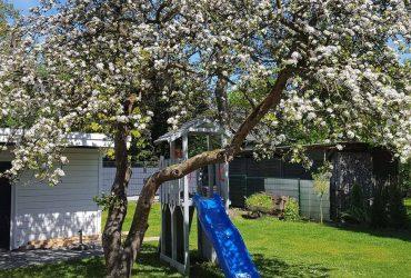 Der wichtige Mai! Was ist zu tun im Garten?